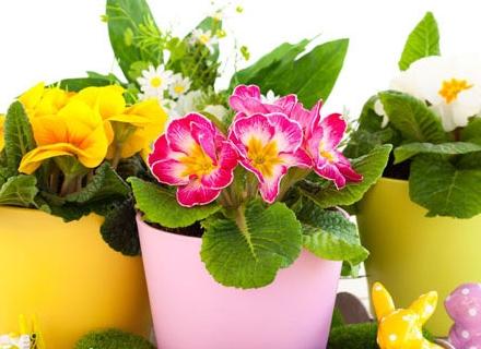 Цветята, които пречистват въздуха у дома