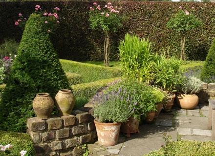 Чемшир - естествена декорация за двора