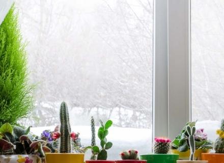Зимни грижи за цветята у дома