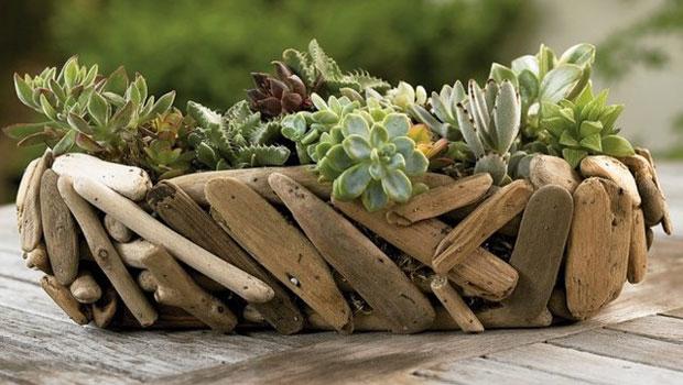 Декорация на дома със сукулентни растения