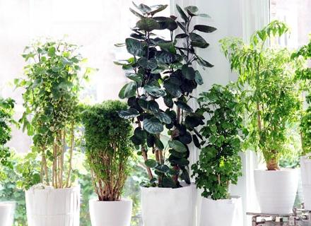 Опасни стайни растения