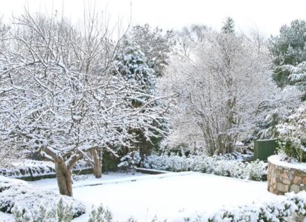 Какво трябва да свършим в градината през януари