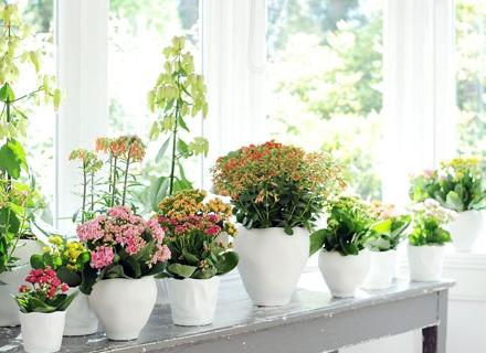 Кои са най - ароматните стайни растения