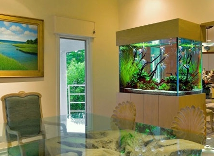 Интериорен аквариум - кътче природа у дома