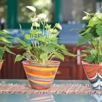 Растения, които внасят положителна енергия в дома