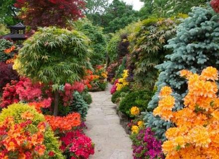 Цветна градина със зимноцъфтящи храсти