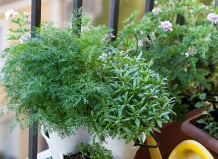 Билкова градина на балкона