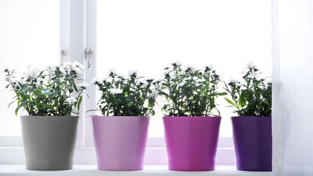 Грижи за стайните цветя през февруари