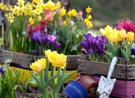 В градината през март