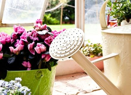 Грижи за стайните цветя през март