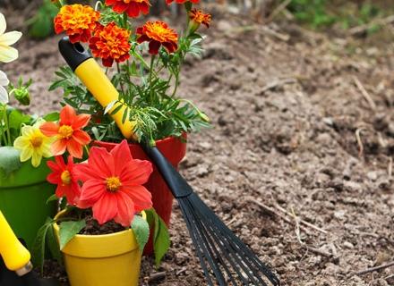 Кои цветя да засадим и пресадим през март