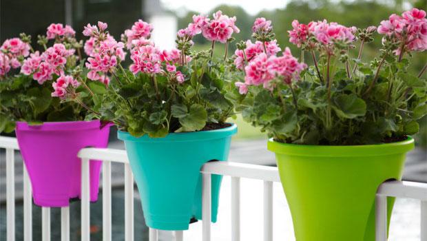 Кои цветя да отглеждаме на балкона