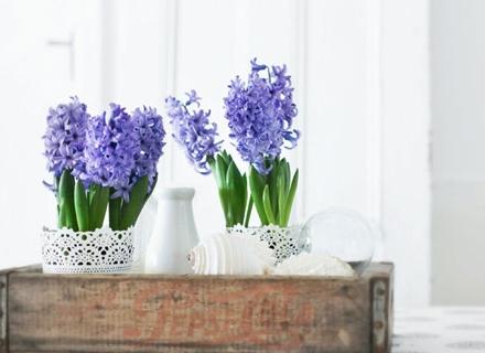 Зюмбюлите - аромат на пролет у дома