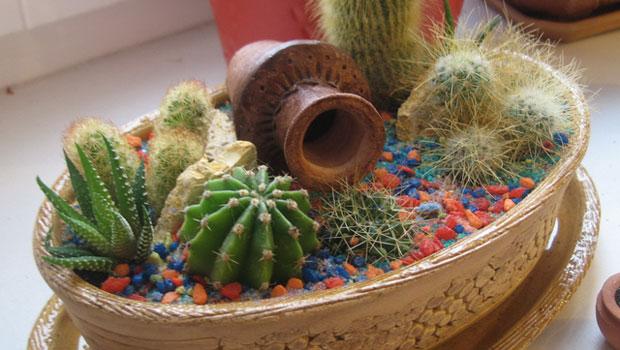 Сезонни грижи за кактусите
