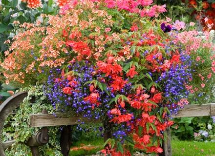 Цветя красят старите вещи