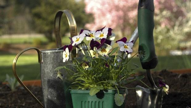 Какво трябва да свършим в градината през април