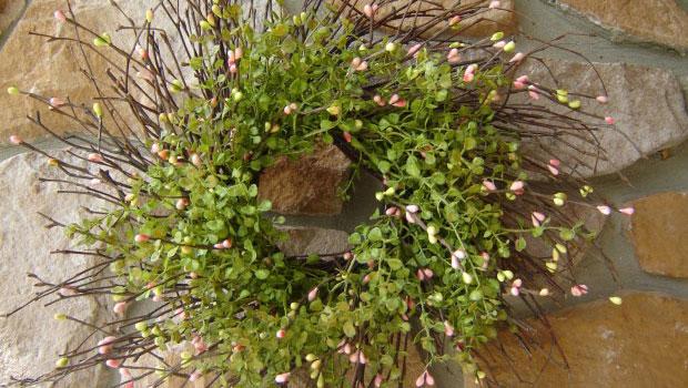 Идеи за пролетен венец