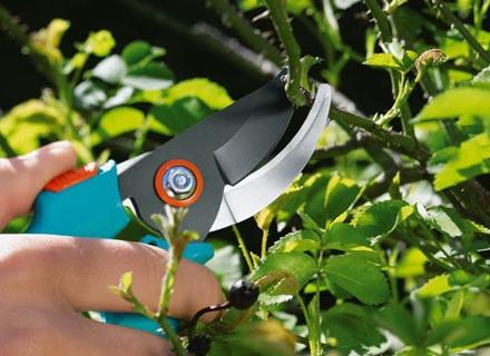 Как да изберем правилните градински ножици