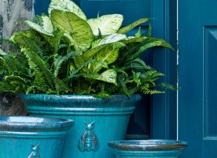 Най - лесните за отглеждане стайни растения