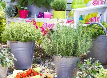 Грижи за градината през юни