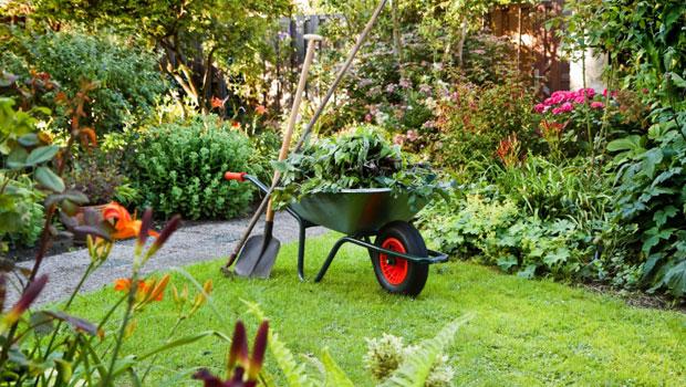 В градината през юли