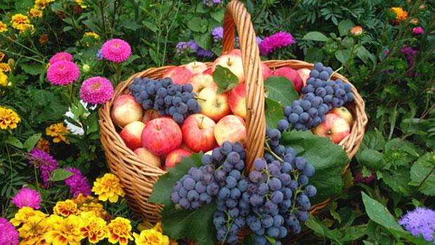 Задачи в градината през август
