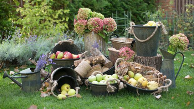 Важни задачи в градината през септември