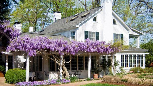 Глицинията - мечта на всеки градинар