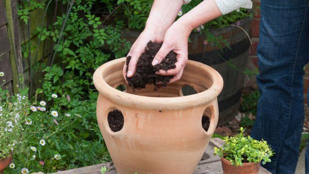 Най - честите грешки на начинаещите градинари