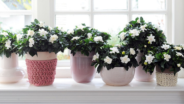 Точното количество светлина за цветята