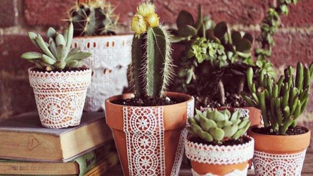 Какво е необходимо на кактуса за да цъфне