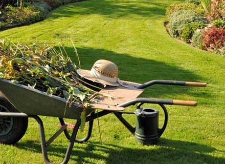 Подрязване на растенията в градината