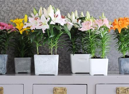 Растения за свеж въздух у дома
