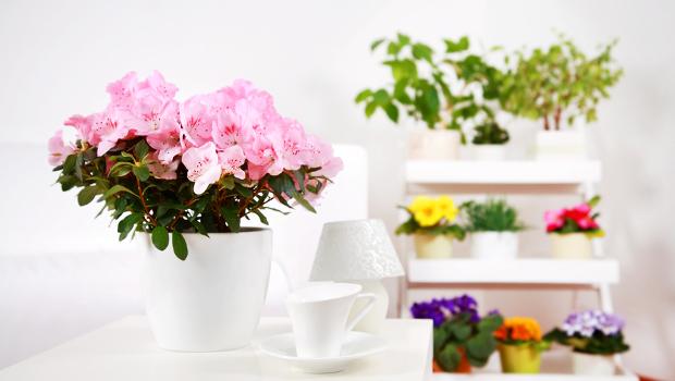 Стайни цветя се борят със стреса у дома и офиса
