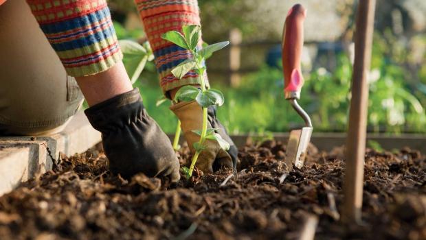 Какво да правим с бедната почва