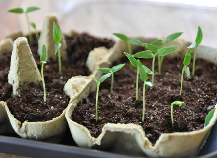 Отглеждане на растения от семена - стъпка по стъпка