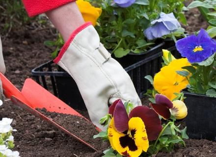 Засаждане на цветя през есента - кога и какви