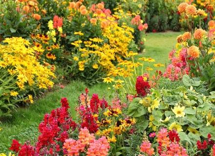 За красива есенна градина изберете високи цъфтящи растения