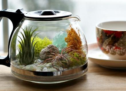Морското дъно в чаша