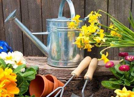 Есенно засаждане на луковични цветя с пролетен цъфтеж