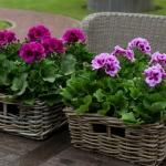 Малки хитринки за голям успех с цветята