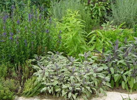 3 билки за ароматен и полезен чай, които можем да отгледаме в градината