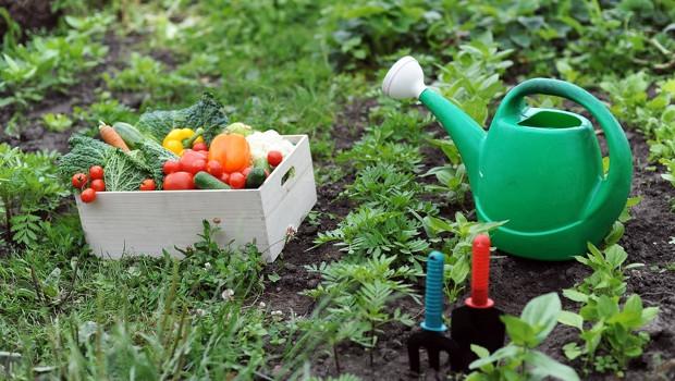 Как да се справим с брашнестата мана по зеленчуковите култури