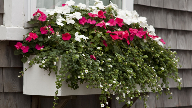 Как да подберем цветята спрямо изложението на прозорците