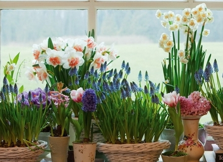 Къде да разположим цветята в малката стая