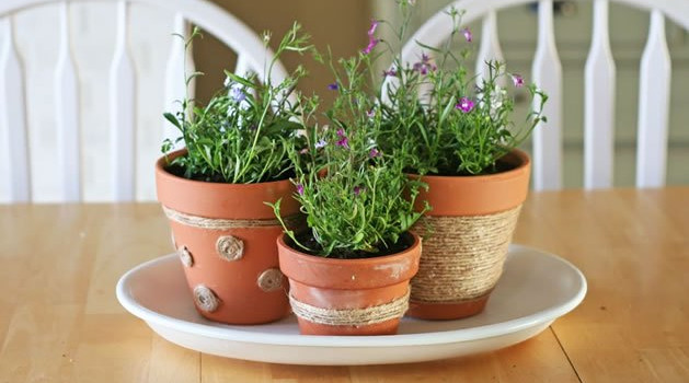 Вредители по стайните растения - как да ги разпознаем и как да се справим с тях
