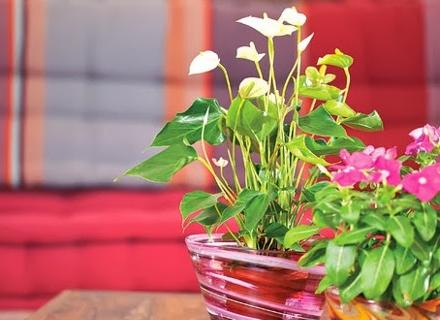 Как да се грижим за стайните цветя през ноември
