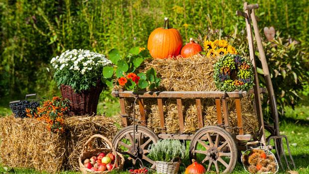 Да подготвим градината за зимата