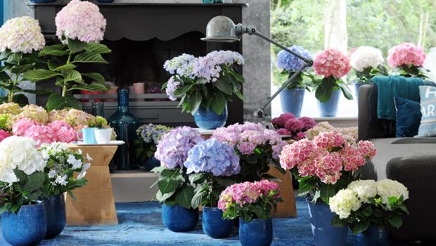 Цвете за всяка стая