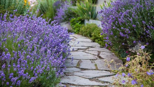 Градина с дъх на прованс